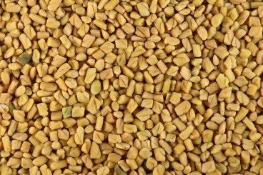 Fenugreek seeds for Arabian Development Company