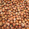 Hazelnut for ADETCO