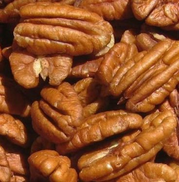 pecan nut for Arabian Development Company