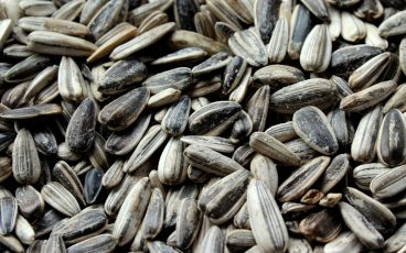 Sunflower seeds for Arabian Development Company